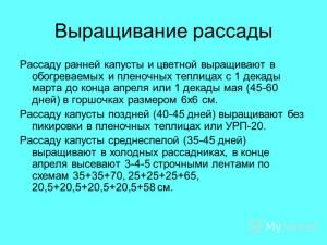 vyirashhivanie-rassadyi-raznyih-vidov-kapustyi