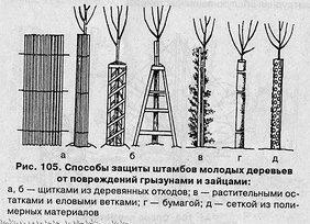 zashhita-shtambov-derevev-ot-gryizunov