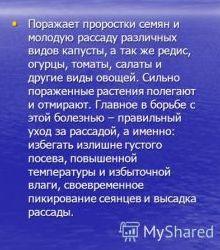 kak-izbavitsya-ot-chernoy-nozhki